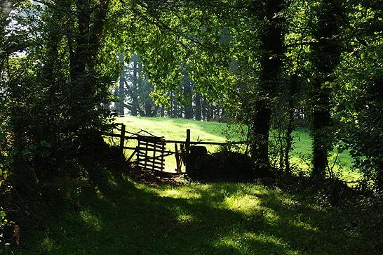 en pleine nature - table d'hôtes Bretagne