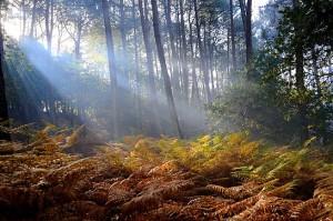 rayon de soleil sur la nature - maison d'hôtes Bretagne